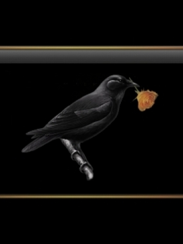 Black Bird with Rose Wallpaper
