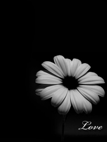 Black Love Flower Wallpaper