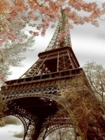 Cherry Blossom Eiffel Tower