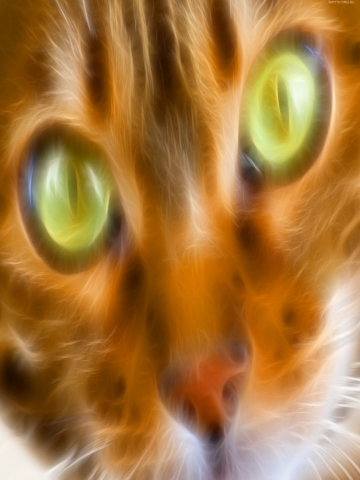 Close Up Kitty Wallpaper