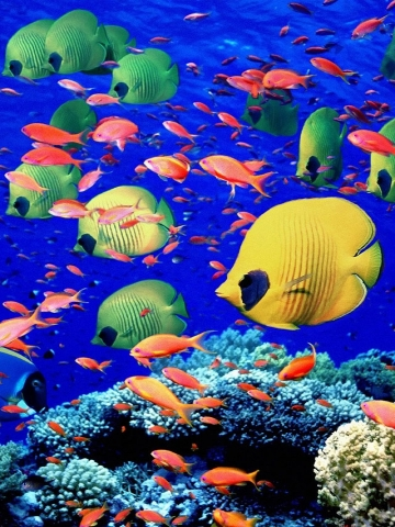 Colorful Fish Wallpaper