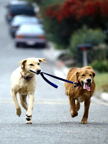 Cute dogs category animals downloads 302 uploaded 10 08 2010 tags cute
