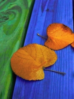 Fall Leaves On Colored Wood