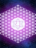 Flower of Life Neons