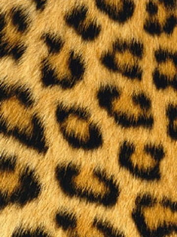 Furry Leopard Print Wallpaper