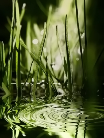 Grass WaterDrop Wallpaper
