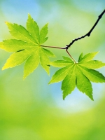 Green Tree Leaves
