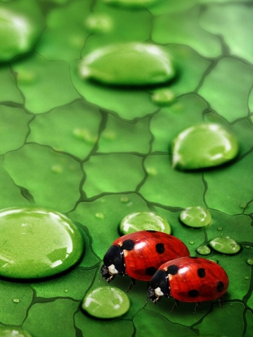 Lady Bugs Wallpaper