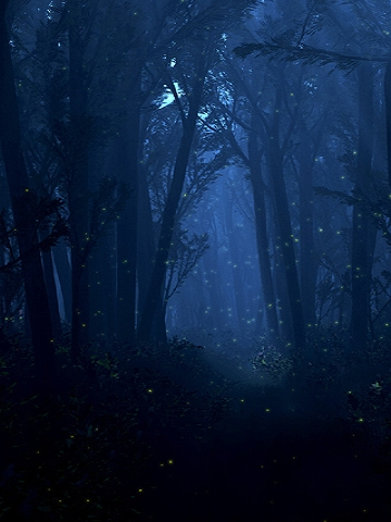 Lighting Bugs in Forest Wallpaper