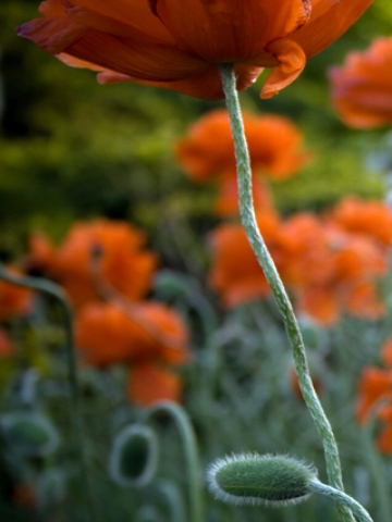 Orange Flower Stems Wallpaper