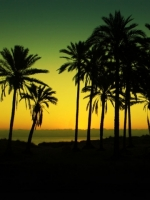 Palm Tree Silhouette Yellow Background