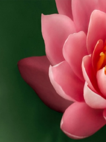 Pink Flower Petals Green Background Wallpaper