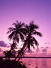 Pink Sky Palm Trees
