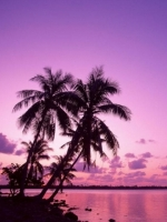 Purple Beach Sun Set