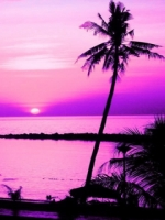 Purple Palmtree