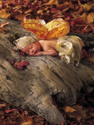 Sleeping Baby on Tree Wallpaper