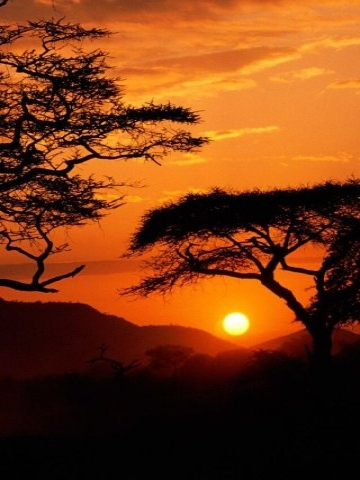 Sunset on Serengeti Wallpaper