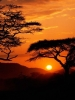 Sunset on Serengeti