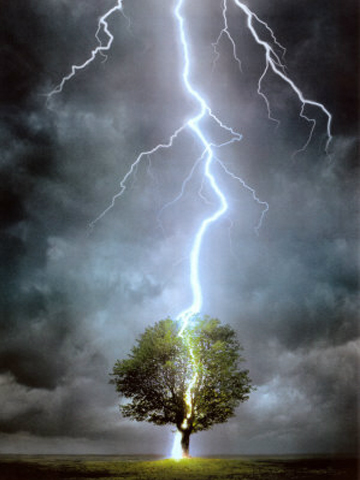 Tree Lightning Wallpaper