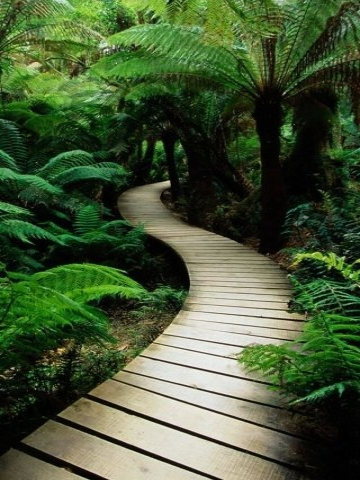 Tropical Bridge in Forest Wallpaper