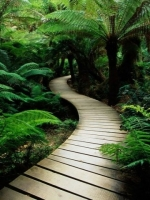 Tropical Bridge in Forest