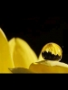 Water Drop on Yellow Petal
