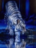 White Tiger Reflection