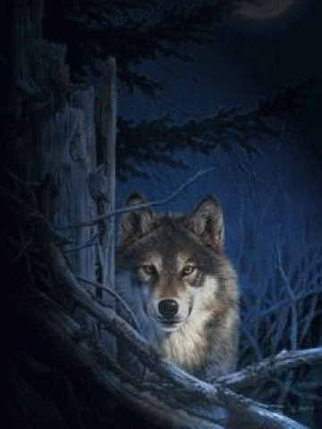Wolf at Night Wallpaper
