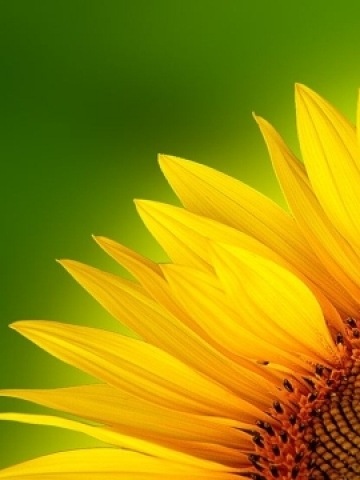 Yellow Flower Petals Wallpaper