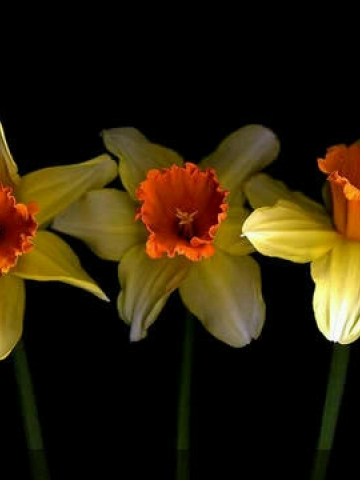 Yellow and Orange Flower Wallpaper