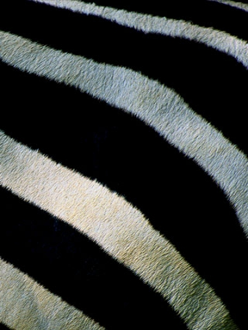 Zebra Pattern Wallpaper