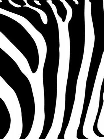 Zebra Prints Wallpaper