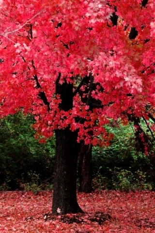 Pink Fall Leaves Wallpaper
